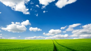 grass-nature-sky-clouds-field-87504